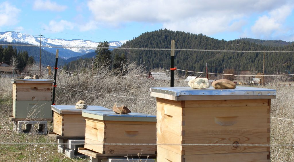 Apiary with Mountains